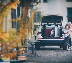 Автобокс для собак 4pets ECO1 Small / 10.70510.0250